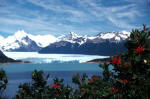 Firebush and Perito Moreno